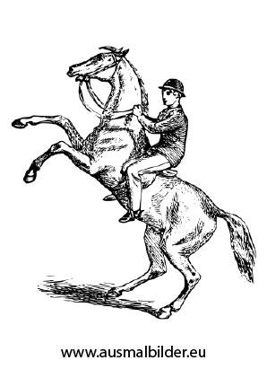 Ausmalbild Aufsteigendes Pferd mit Reiter kostenlos ausdrucken
