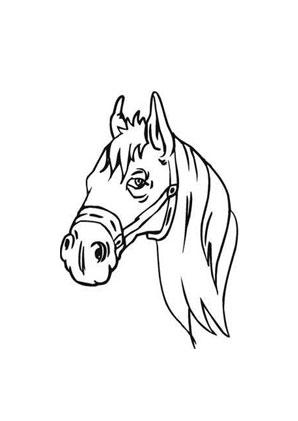 ausmalbilder kopf von pferd - pferde malvorlagen