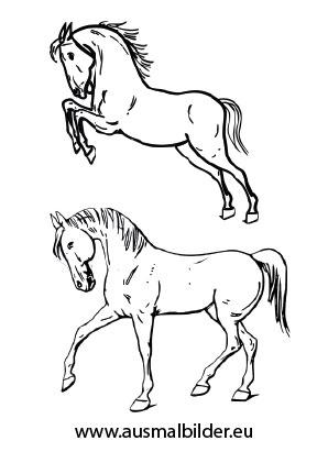 ausmalbild pferde zum ausdrucken