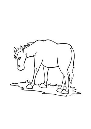 Ausmalbilder Pony Auf Der Wiese Pferde Malvorlagen