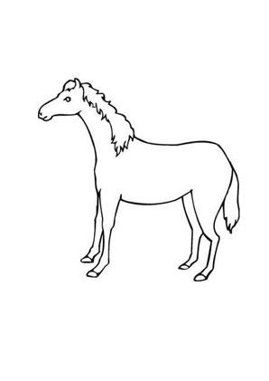 Ausmalbilder Scheüs Fohlen Pferde Malvorlagen