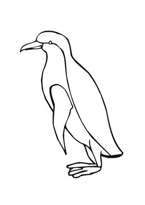 ausmalbilder kaiserpinguin pinguine malvorlagen