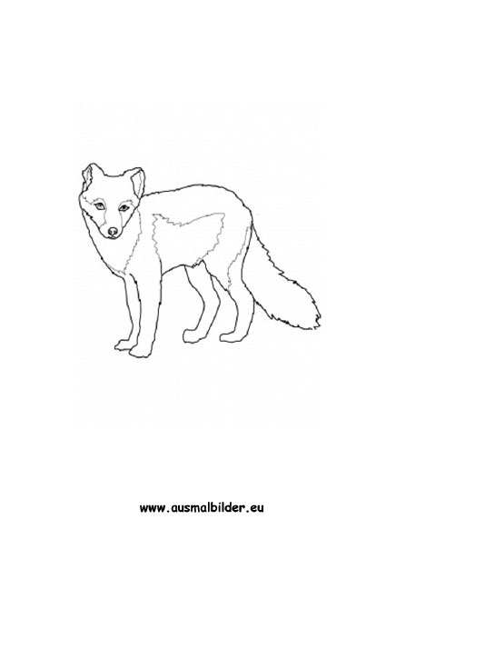 ausmalbilder polarfuchs  polarfüchse malvorlagen