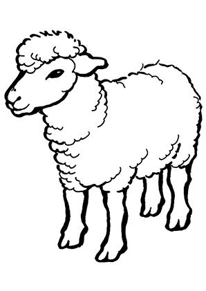 Ausmalbilder Schaf 2 - Schafe Malvorlagen