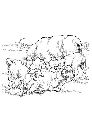 Ausmalbild Schafe Auf Dem Feld Zum Ausdrucken