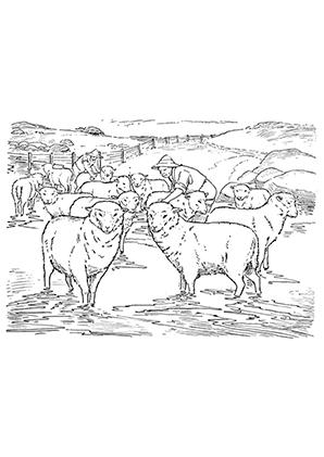 ausmalbilder schafe und baürn - schafe malvorlagen
