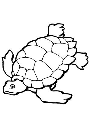 Ausmalbilder Schildkröte 1 - Schildkröten Malvorlagen