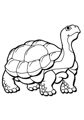Ausmalbilder Schildkröte 2 - Schildkröten Malvorlagen