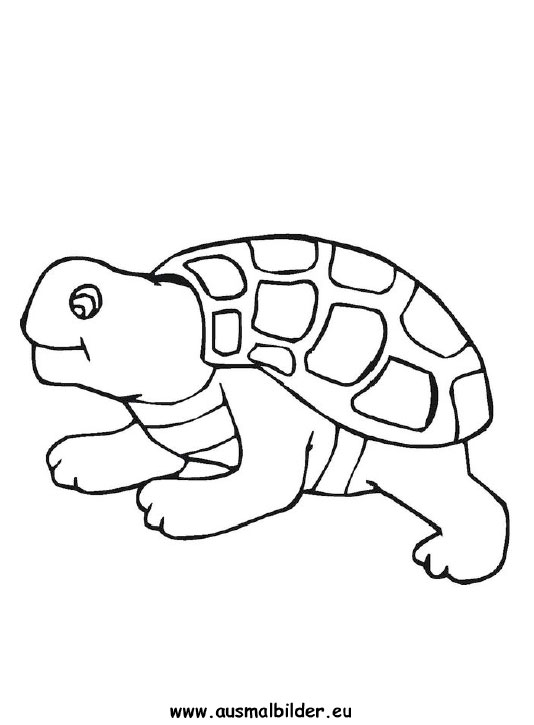 ausmalbild schildkröte zum ausdrucken