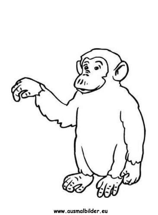 Coloring Pages Baby Monkeys