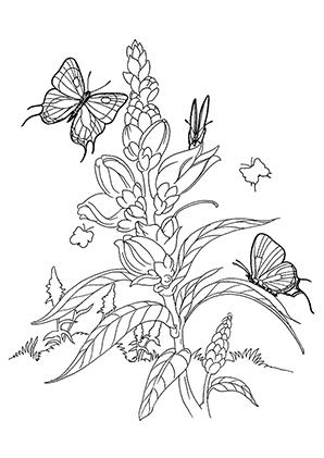 Ausmalbilder Schmetterlinge Auf Einer Blüte Schmetterlinge Malvorlagen