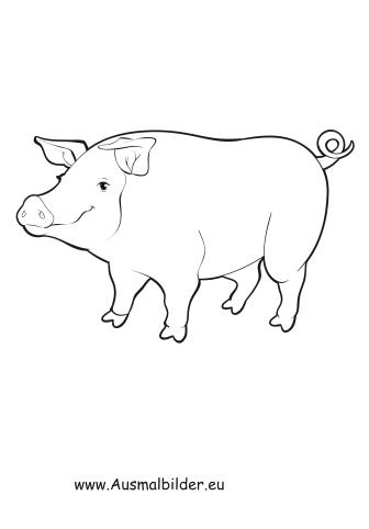 ausmalbilder dickes schwein - schweine malvorlagen