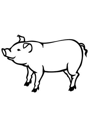 Ausmalbilder schwein 3 - schweine Malvorlagen