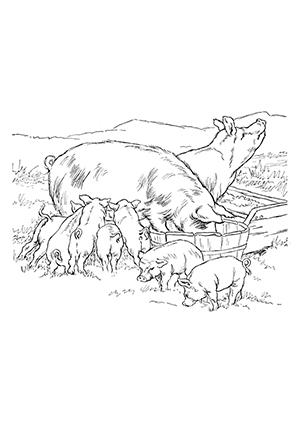 Malvorlage Schweinekopf Ausmalbild 17585