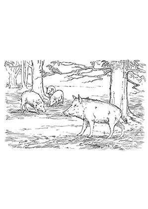 ausmalbilder schweine im wald - schweine malvorlagen