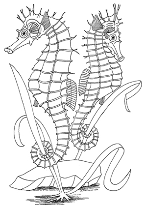 Realistic Ocean Life Coloring Pages
