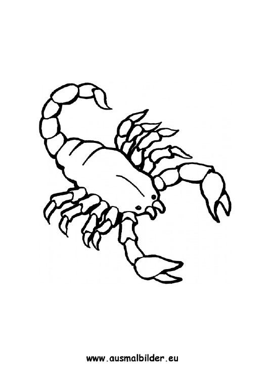 Ausmalbild Skorpion Kostenlos Ausdrucken