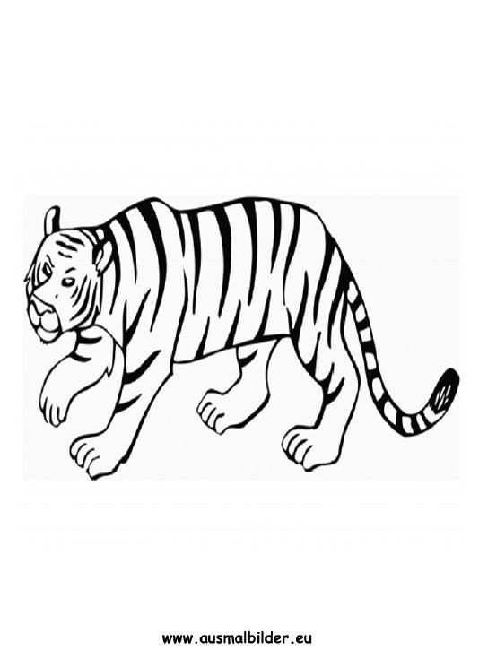 ausmalbilder tiger - tiger malvorlagen