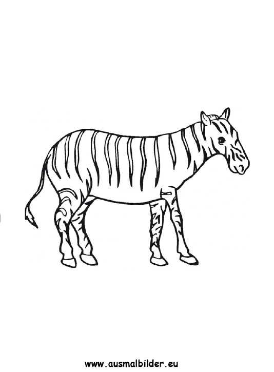 Ausmalbilder Zebra Zebras Malvorlagen