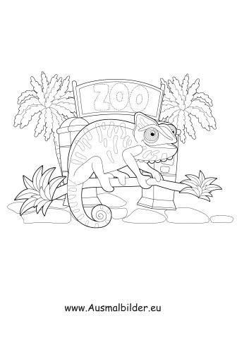 Ausmalbilder Salamander Im Zoo Zoo Malvorlagen