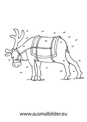 ausmalbilder weihnachtliches rentier - weihnachtsrentier malvorlagen
